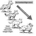 hond-300×294